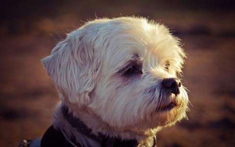 Voici l'histoire de Rambo, le petit chien
